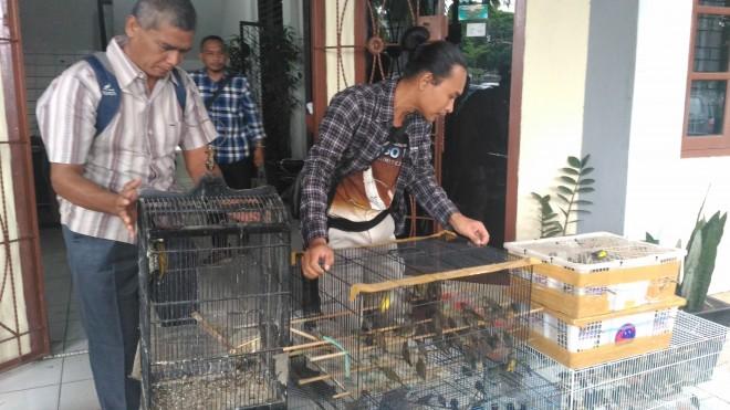 Segini Harga Burung Kolibri Di Pasar Gelap
