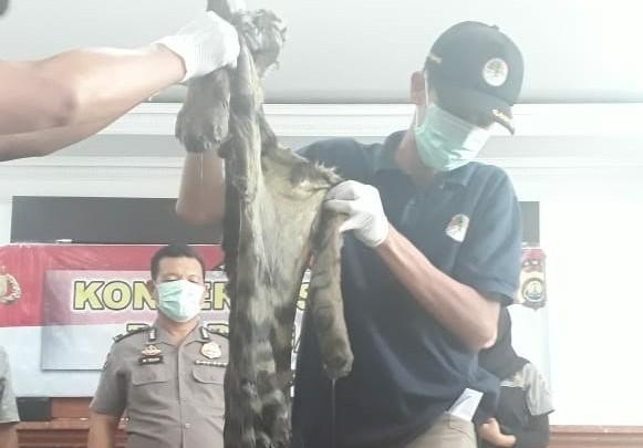 Kulit dan Tulang Hariamau Senilai Ratusan Juta saat diamankan Polisi.