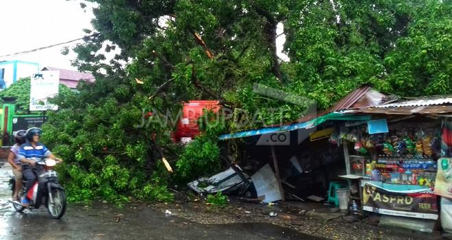 Pohon tumbang di Jalan Dara Petak II, Kecamatan Jambi Timur menimpa pangkalan ojek dan warung kelontong. Tidak ada korban jiwa.