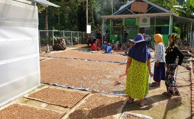 Pengelolaan buah kepayang menjadi minyak kepayang di bawah pembinaan KPHP Limau Sarolangun/ foto: istimewa