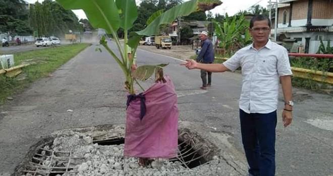 Warga Tanam Pohon Pisang di Jalan Lintas Sumatra.