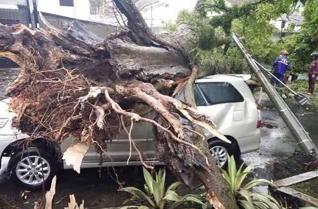 Pohon tumbang akibat hujan badai di Kota Malang, Selasa (19/2). (Fisca Tanjung/JawaPos.com)