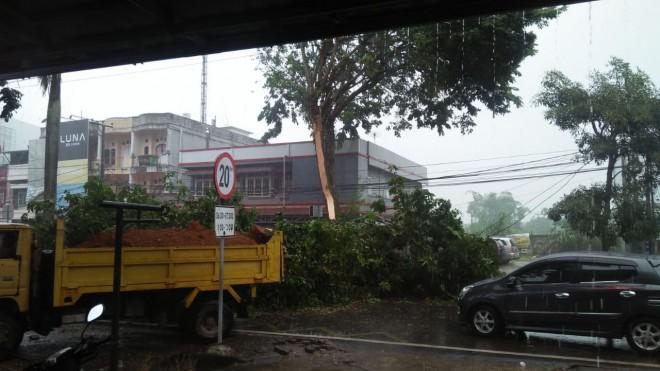 Pohon Besar di Thehok Tumbang Timpa Pengendara Motor.