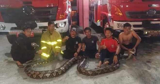 Petugas Damkar Bungi, usai menangkap ular di wilayah pemukiman warga. Foto : Ferdian / Jambiupdate