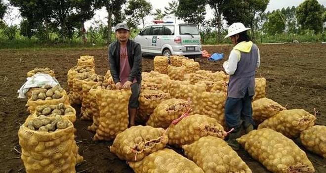 Petani kentang asal Kerinci yang akan memasarkan kentang tanaman mereka. Foto : Gusnadi / Jambiupate