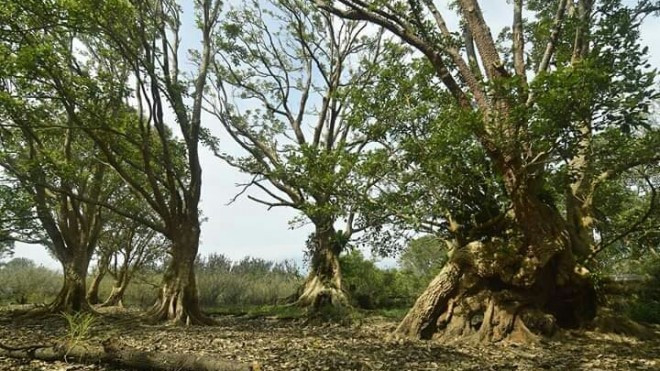 Pulau Kelelawar. Foto: Istimewa