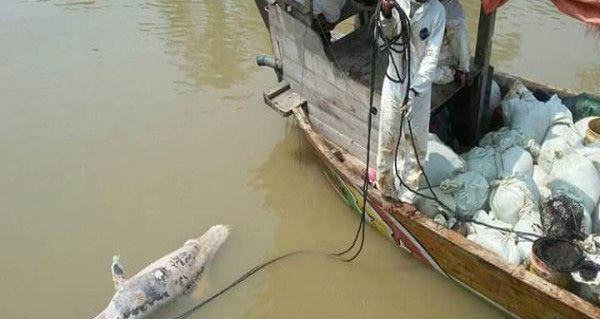Lumba-Lumba Ditemukan Mati di Laut Karawang.