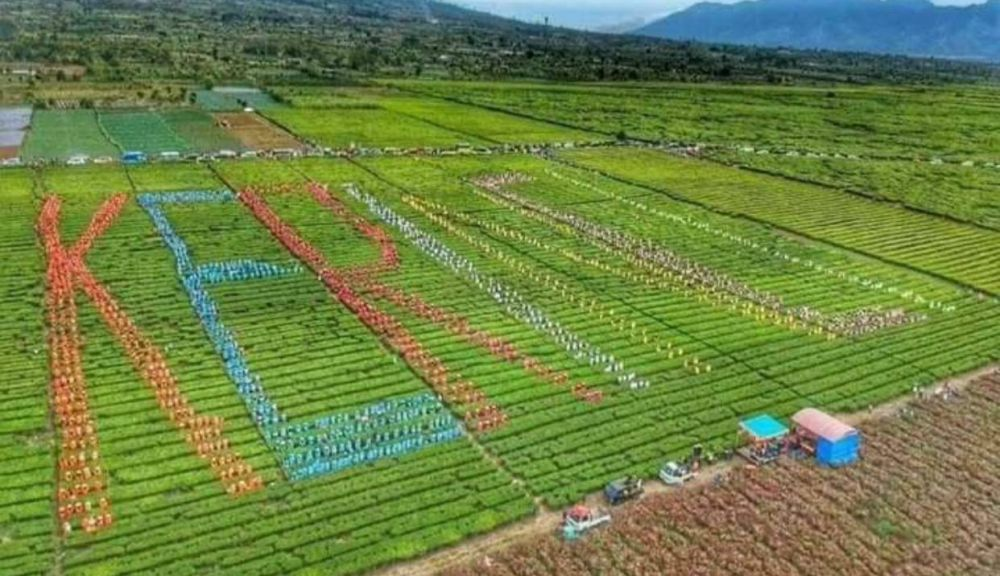 Ribuan masyarakat Kerinci, pada Rabu (06/10) hari ini, melakukan memetik daun teh di kaki Gunung Kerinci, yang merupakan masuk dalam rangkaian Festival Kerinci yang digelar pada 3-7 November 2019.