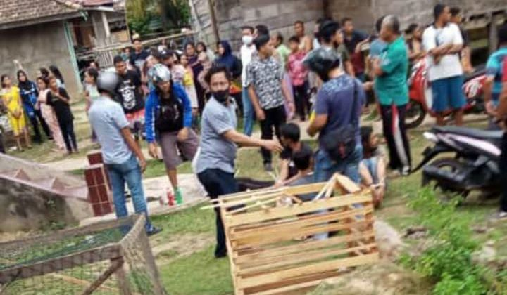 Pulau Kayu Aro Kembali di Grebek Polisi, 4 Orang Ditangkap, Bandar berhasil Kabur