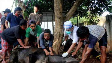 Menggunakan APD tukang jagal saat akan menyembelih hewan qurban pada acara Perayaan Idul Adha di Halaman Musholah Al Mujahirin Perum Cluster Ciledug Land, Kota Tangerang, Banten (1/8). Di Musholah tersebut menyembelih 3 Ekor sapi dan 5 Kambing dengan menerapkan protokol kesehatan guna menghindari penyebaran Covid-19. FOTO: FAISAL R. SYAM / FAJAR INDONESIA NETWORK.