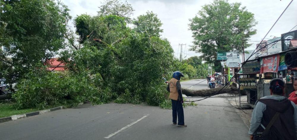 Pohon besar dikawasan Kambang, Kota Jambi tumbang pada (16/9). Kabel dan Tiang Listrik Ikut Roboh Akibat Tertimpa Pohon.
