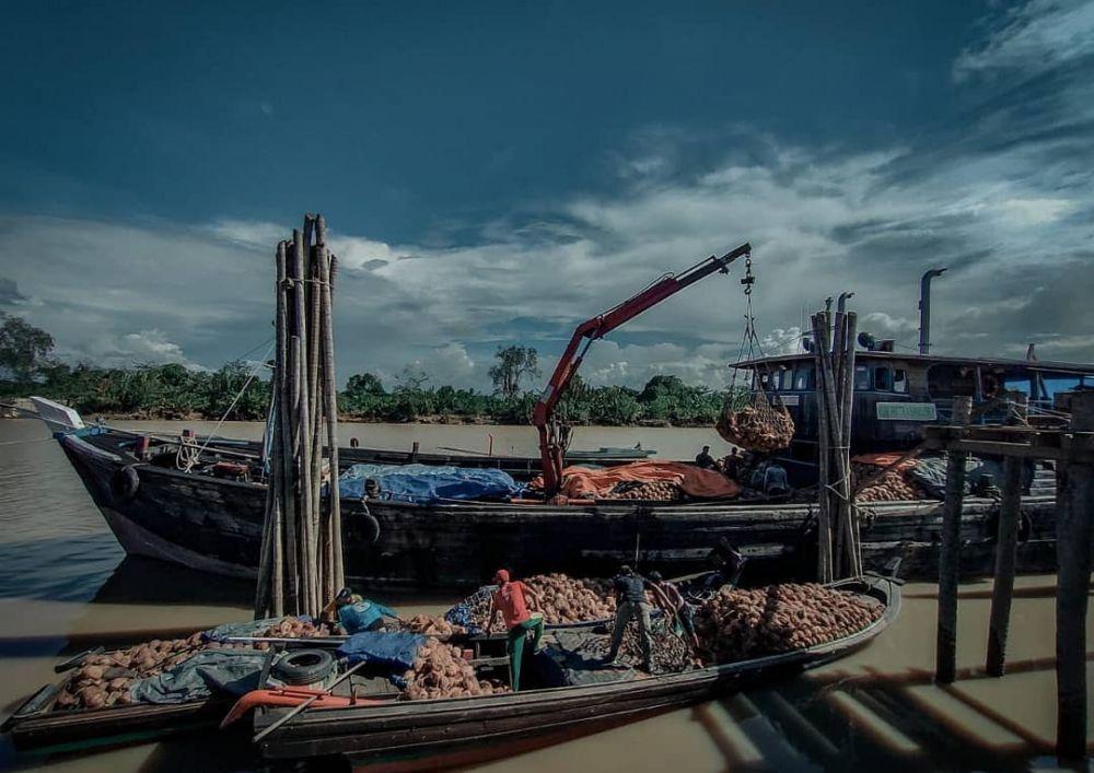 Bongkar muat kelapa dalam (Cocos Nucifera) dari perahu mesin ke dalam kapal di Desa Teluk Majelis, Kecamatan Kuala Jambi, Kabupaten Tanjung Jabung Timur, Jambi, untuk dikirim ke Riau, Selasa (23/3/2021).