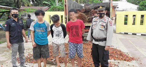 Kapolsek Sangir Jujuan Iptu Benizar berhasil membekuk tiga tersangka pencuri sawit.
